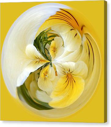 Pansy Ball Canvas Print by James Steele