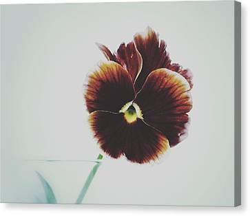 Canvas Print featuring the photograph Pansy Face by Karen Stahlros