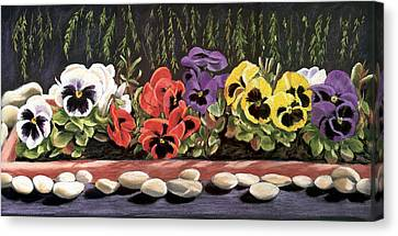 Pansy Palette Canvas Print by Vanda Luddy