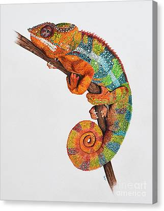 Panther Chameleon Canvas Print by Biophilic Art