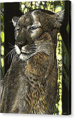 Panther Contemplates Canvas Print by William Underwood
