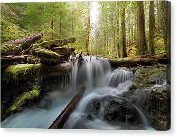 Panther Creek In Gifford Pinchot National Forest Canvas Print by David Gn
