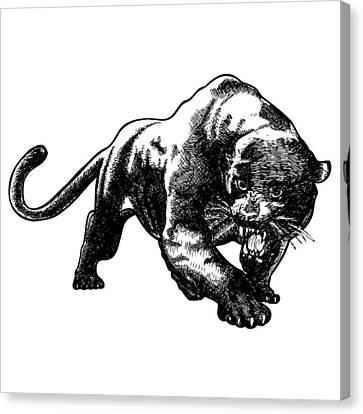 Panther Canvas Print by Karl Addison