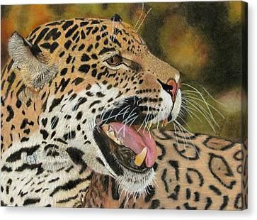 Panthera Canvas Print by Lori Hanks