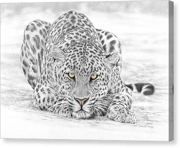 Panthera Pardus - Leopard Canvas Print by Steven Paul Carlson