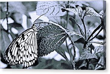 Butterfly Canvas Print - Paper Kite No. 7-1 by Sandy Taylor