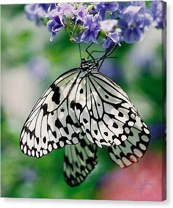 Canvas Print featuring the photograph Paper Rice Butterfly by Donna Brown