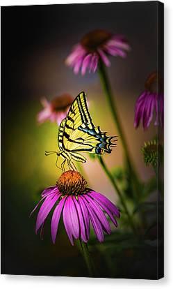 Papilio Canvas Print