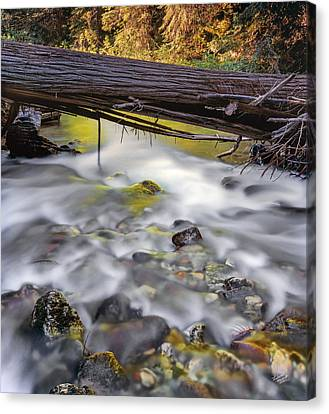 Papoose Creek Canvas Print by Leland D Howard