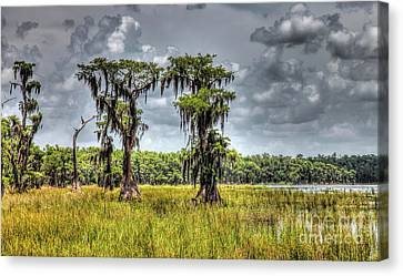 Parade Of Cypress Trees Canvas Print by Felix Lai