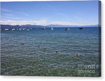 Boats In Water Canvas Print - Parade Of Geese by Carol Groenen