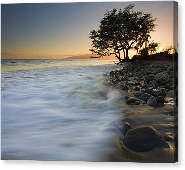 Paradise Gold Canvas Print