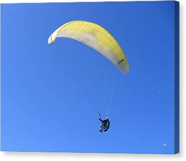 Paraglider And Seagull Canvas Print by Will Borden