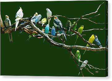 Parakeets N Cockatiels Canvas Print by DiDi Higginbotham
