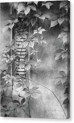 Parallel Botany #0810 Canvas Print