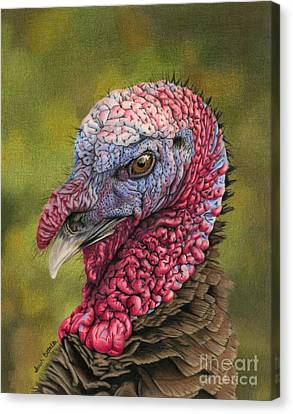 Turkey Canvas Print - Pardon Me? by Sarah Batalka