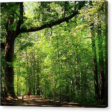 Paris Mountain State Park South Carolina Canvas Print by Bellesouth Studio