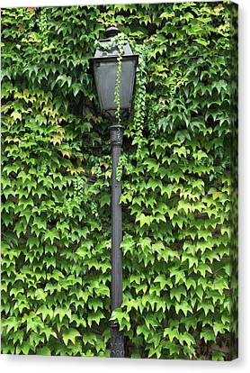 Parisian Lamp And Ivy Canvas Print