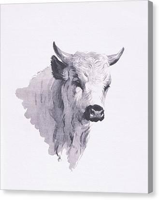 Park Cattle Canvas Print