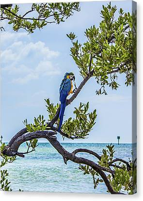 Canvas Print featuring the photograph Parrot Above The Aqua Sea by Paula Porterfield-Izzo