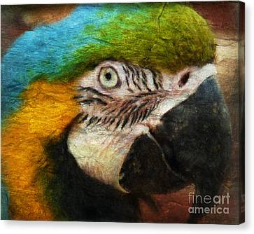 Blue And Gold Macaw Canvas Print - Parrot by Angela Doelling AD DESIGN Photo and PhotoArt