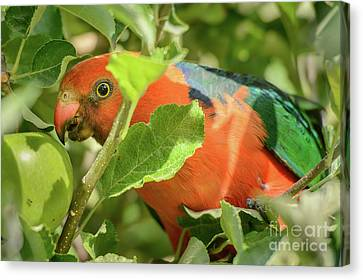 Canvas Print featuring the photograph  Parrot In Apple Tree by Werner Padarin