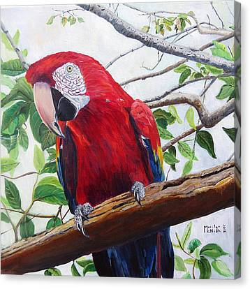 Parrot Portrait Canvas Print by Marilyn  McNish