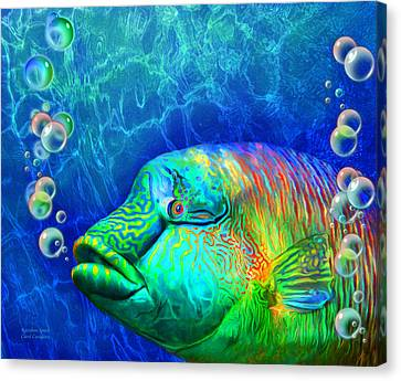 Parrotfish - Rainbow Spirit Canvas Print