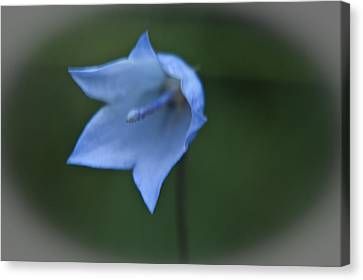 Canvas Print featuring the photograph Parrys Bell Flower by Daniel Hebard