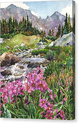 Parry's Primrose Canvas Print by Anne Gifford