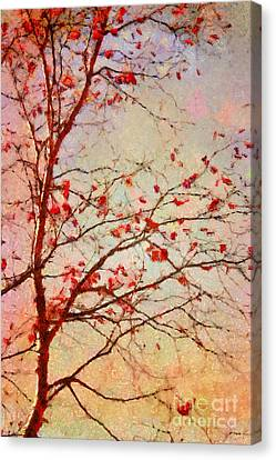 Parsi-parla - D04c03t01 Canvas Print by Variance Collections