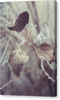 Part Of Translucent Reality. Vertical Canvas Print by Jenny Rainbow