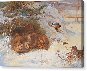 Partridge And A Bullfinch In The Snow  Canvas Print by Archibald Thorburn