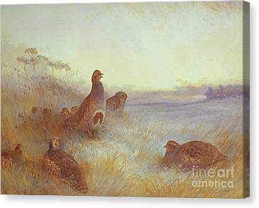 Partridges In Early Morning Canvas Print
