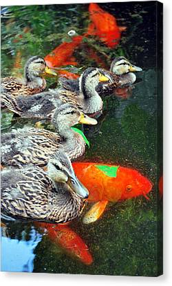 Party In The Water Canvas Print
