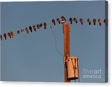 Cost Line Canvas Print - Party Line by Jon Burch Photography