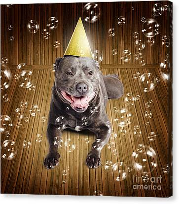 Staffordshire Bull Terrier Canvas Print - Partytime For A Staffie Birthday Dog by Jorgo Photography - Wall Art Gallery