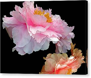 Pas De Deux Glowing Peonies Canvas Print by Lynda Lehmann