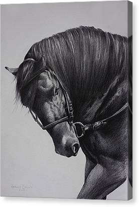 Paso Fino Canvas Print by Harvie Brown