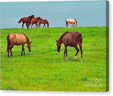 Paso Fino Horses Graze By Seaside Canvas Print by Thomas R Fletcher