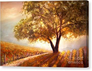 Paso Robles Golden Oak Canvas Print