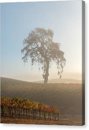Paso Robles Morning Canvas Print by Joseph Smith