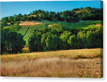 Pastoral Vineyard Canvas Print - Paso Robles Vineyard by Steven Ainsworth