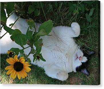 Passed Out Under The Daisies Canvas Print by Marna Edwards Flavell