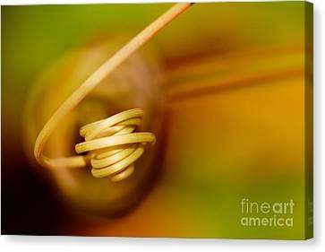 Passiflora Canvas Print - Passiflora Closeup II by Nick  Biemans