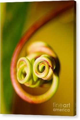 Passiflora Canvas Print - Passiflora Closeup by Nick  Biemans