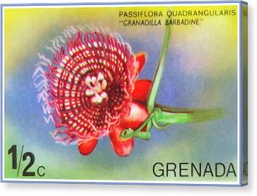 Passiflora Canvas Print - Passiflora Quadrangularis by Lanjee Chee