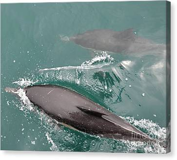 Passing Dolphins Canvas Print by Timothy OLeary