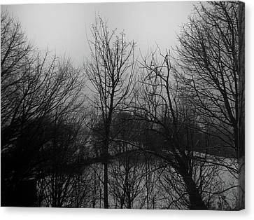 Passing Trees - Winters Day Canvas Print