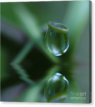 Passion Drop Canvas Print by Kym Clarke
